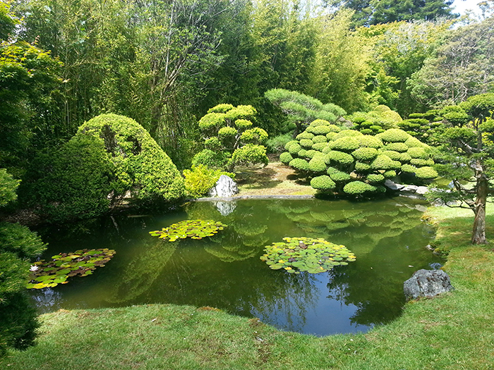 Pond in the Japanese Tea Garden