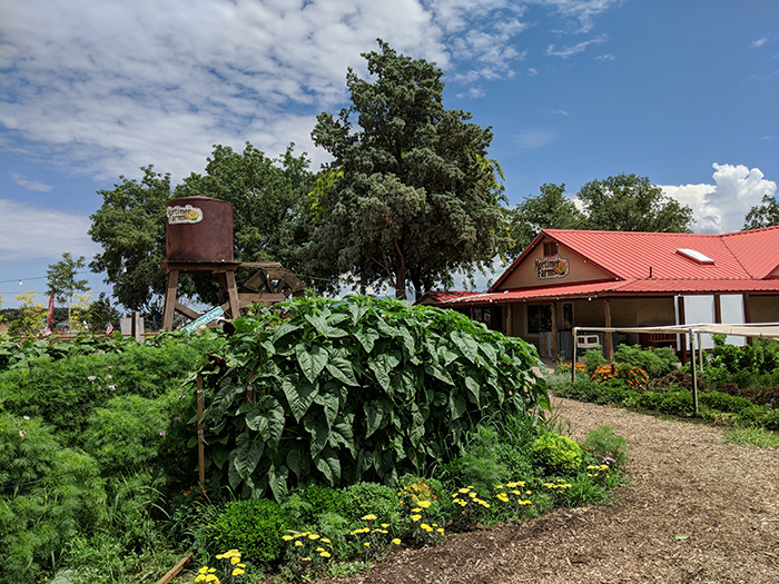 Mortimer Farms garden