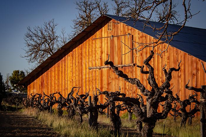 Barn with grape vines